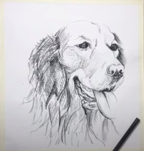 How to Draw a Dog Sketch