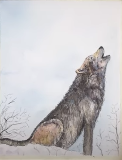 how Draw a Wolf