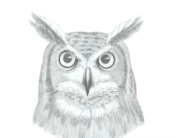 How to Draw an Owl Face