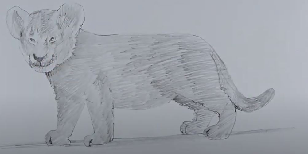 How to Draw Lion Cub
